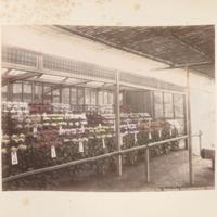 https://repository.erc.monash.edu/files/upload/Rare-Books/Japanese-Albums/jp-02-019.jpg