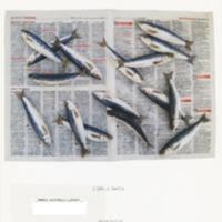 https://repository.monash.edu/files/upload/Caulfield-Collection/art-catalogues/ada-exhib_catalogues-686.pdf