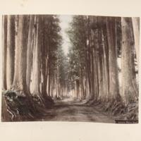 https://repository.erc.monash.edu/files/upload/Rare-Books/Japanese-Albums/jp-02-020.jpg