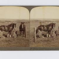 https://repository.erc.monash.edu/files/upload/Rare-Books/Stereographs/Aust-NZ/anz-144.jpg