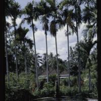 https://repository.erc.monash.edu/files/upload/Asian-Collections/Myra-Roper/indonesia-01-050.jpg