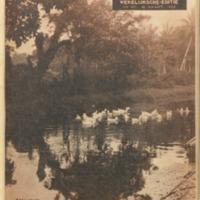 https://repository.monash.edu/files/upload/Asian-Collections/Sin-Po/ac_1934_03_10.pdf