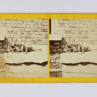 https://repository.erc.monash.edu/files/upload/Rare-Books/Stereographs/Aust-NZ/anz-040.jpg