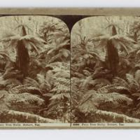 https://repository.erc.monash.edu/files/upload/Rare-Books/Stereographs/Aust-NZ/anz-137.jpg