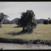https://repository.erc.monash.edu/files/upload/Asian-Collections/Myra-Roper/thailand-03-018.jpg