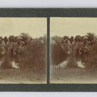 https://repository.erc.monash.edu/files/upload/Rare-Books/Stereographs/Aust-NZ/anz-103.jpg
