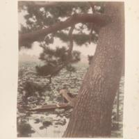https://repository.erc.monash.edu/files/upload/Rare-Books/Japanese-Albums/jp-02-014.jpg