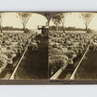 https://repository.erc.monash.edu/files/upload/Rare-Books/Stereographs/Aust-NZ/anz-065.jpg