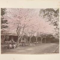 https://repository.erc.monash.edu/files/upload/Rare-Books/Japanese-Albums/jp-02-015.jpg