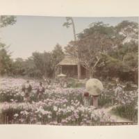 https://repository.erc.monash.edu/files/upload/Rare-Books/Japanese-Albums/jp-02-017.jpg